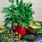 Bylinky SEMO - široký výběr osiva a semen bylinek z naší produkce