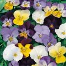 Květiny trvalky SEMO - široký výběr osiva a semen z naší produkce