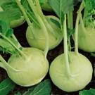 HOBBY, zelenina - Kedluben, 0300 (Brassica oleracea L. convar acephala (DC.) var. gongylodes)