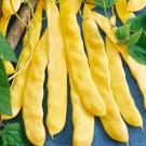 HOBBY, zelenina - Fazol zahradní pnoucí, 0930 (Phaseolus vulgaris L.)