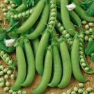 HOBBY, zelenina - Hrách setý dřeňový, 1000 (Pisum sativum L.)