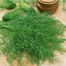 HOBBY, zelenina - Kopr vonný, 1600 (Anethum graveolens L.)
