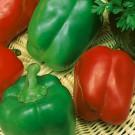 HOBBY, zelenina - Paprika roční sladká, 2500 (Capsicum annuum L. (partim))