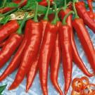 HOBBY, zelenina - Paprika kořeninová, 2540 (Capsicum annuum L. (partim))