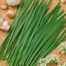 HOBBY, zelenina - Pažitka čínská, 2810 (Allium tuberosum)