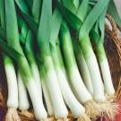 HOBBY, zelenina - Pór pravý, 2900 (Allium porrum L.)
