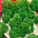 HOBBY, zelenina - Petržel zahradní naťová, 3050 (Petroselinum crispum (Miller) Nyman ex A.W.Hill)