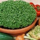 HOBBY, zelenina - Řeřicha zahradní, 3600 (Lepidum sativum L.)