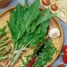 HOBBY, zelenina - Šťovík zahradní, 3640 (Rumex patientia L.)