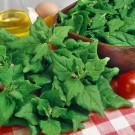 HOBBY, zelenina - Špenát novozélandský, 3930 (Spinacia oleracea L.)