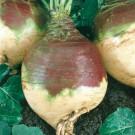 HOBBY, zelenina - Tuřín, 4120 (Brassica napus L. var. napobrassica (L.) Rehb.)