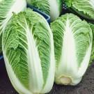 HOBBY, zelenina - Pekingské zelí, 4400 (Brassica rapa L.)