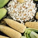 HOBBY, zelenina - Kukuřice setá pukancová, 4600 (Zea mays L.)