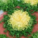 HOBBY, zelenina - Endivie (Štěrbák), 4840 (Cichorium endivia L.)