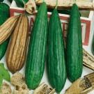 HOBBY, zelenina - Lufa valcovitá, 4916 (Luffa cylindrica L.)
