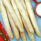 HOBBY, zelenina - Chřest, 4920 (Asparagus officinalis L.)