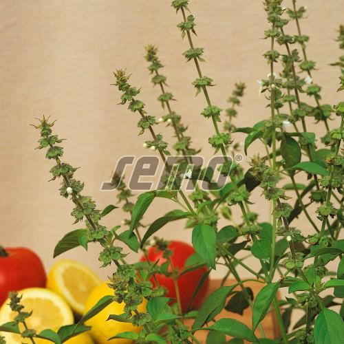 PROFI, Bylinky SEMO - Bazalka pravá Lime, p5909 (Ocimum basilicum L.)