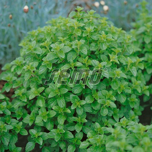 PROFI, Bylinky SEMO - Dobromysl, p5910 (Origanum vulgare L.)