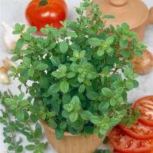 PROFI, Bylinky SEMO - Majoránka zahradní, p5934 (Origanum majorana L.)