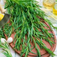 PROFI, Bylinky SEMO - Pelyněk kozalec, p5945 (Artemisia dracunculus L.)