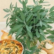 PROFI, Bylinky SEMO - Šalvěj lékařská, p5955 (Salvia officinalis L.)