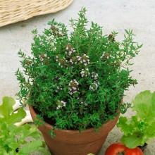 PROFI, Bylinky SEMO - Tymián obecný, p5960 (Thymus vulgaris L.)