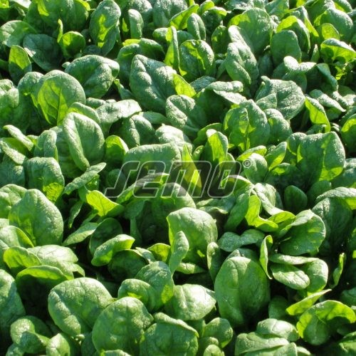 PROFI, Osivo Pop Vriend Seeds - Špenát Santa Cruz, p3917 (Spinacia oleracea L.)