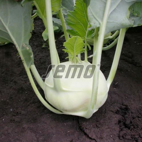 PROFI, Zelenina SEMO - Kedluben Dvorana, p0301 (Brassica oleracea L. convar. acephala (DC) var. gongylodes)