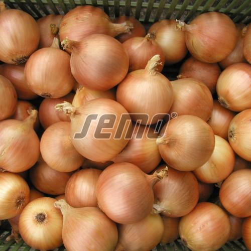 PROFI, Zelenina SEMO - Cibule kuchyňská Lusy, p0529 (Allium cepa L.)