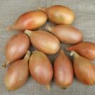 PROFI, Zelenina SEMO – Cibule kuchyňská Elista, p0533