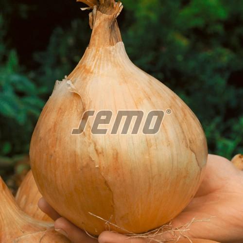 PROFI, Zelenina SEMO - Cibule kuchyňská Globo, p0535 (Allium cepa L.)
