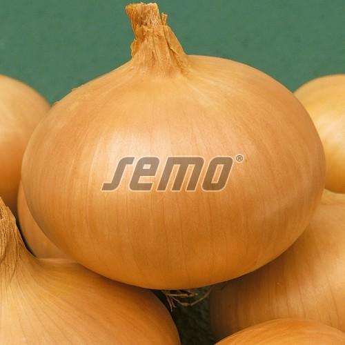 PROFI, Zelenina SEMO - Cibule kuchyňská Hiberna, p0571 (Allium cepa L.)