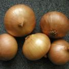 PROFI, Zelenina SEMO – Cibule kuchyňská Augusta, p0575