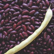 PROFI, Zelenina SEMO - Fazol obecný keříčkový Carmen, p0955 (Phaseolus vulgaris L.var. nanus (L.) Aschers.)