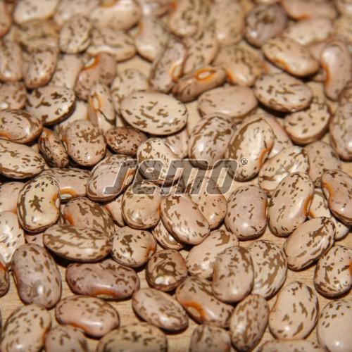 PROFI, Zelenina SEMO - Fazol obecný keříčkový Inka, p0958 (Phaseolus vulgaris L.var. nanus (L.) Aschers.)