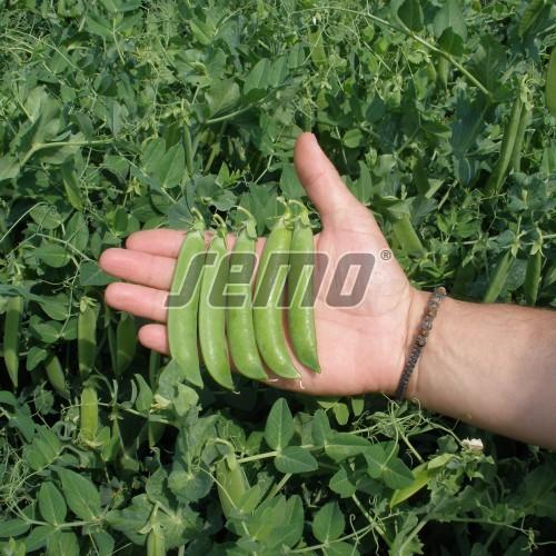 PROFI, Zelenina SEMO - Hrách setý dřeňový Radovan, p1041 (Pisum sativum L. convar. medullare Alef. emend C.O. Lehm)