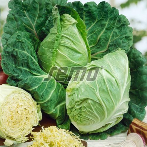 PROFI, Zelenina SEMO - Kapusta hlávková Předzvěst, p1401 (Brassica oleracea L. convar. capitata (L.) Alef. var. sabauda L.)