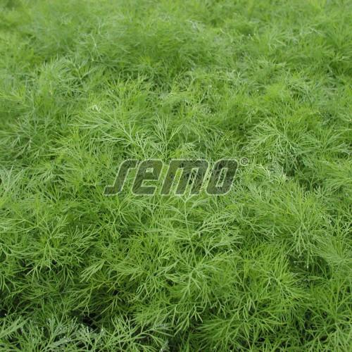 PROFI, Zelenina SEMO - Kopr vonný Hanák®, p1601 (Anethum graveolens L.)