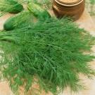 PROFI, Zelenina SEMO – Kopr vonný Mamut, p1605