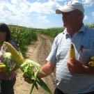 PROFI, Zelenina SEMO – Kukuřice setá cukrová Alojzia F1, p1723