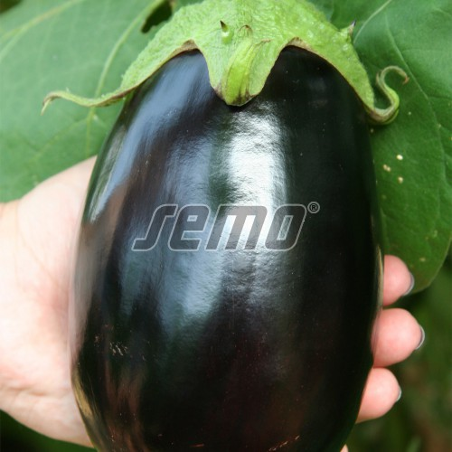 PROFI, Zelenina SEMO - Lilek vejcoplodý Serena F1, p1917 (Solanum melongena L.)