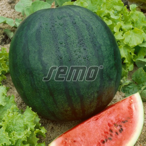 PROFI, Zelenina SEMO - Meloun vodní Sugar baby, p2106 (Citrullus lanatus (Thunb.) Matsum et Nakai)