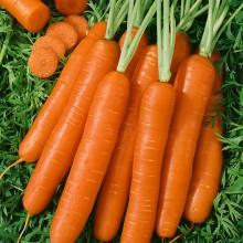 PROFI, Zelenina SEMO - Mrkev obecná Jitka F1, p2262 (Daucus carota L.)