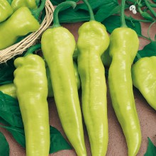 PROFI, Zelenina SEMO - Paprika roční Bělorožec, p2513 (Capsicum annuum L.)