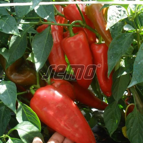 PROFI, Zelenina SEMO - Paprika roční Raduza F1, p2526 (Capsicum annuum L.)