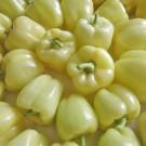 PROFI, Zelenina SEMO – Paprika roční Gelby F1, p2535