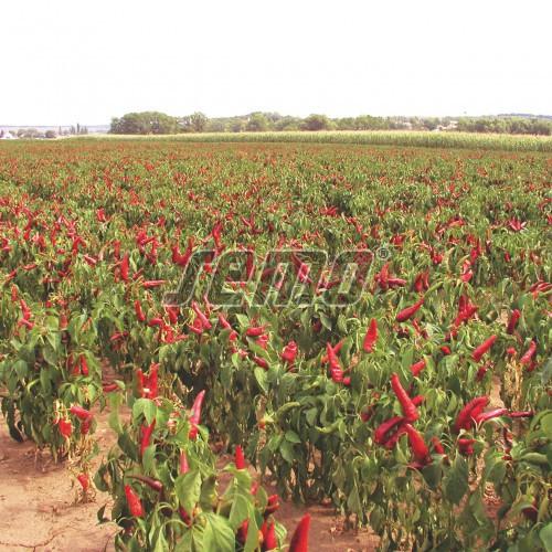 PROFI, Zelenina SEMO - Paprika roční Karkulka, p2541 (Capsicum annuum L.)