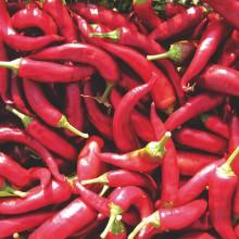 PROFI, Zelenina SEMO - Paprika roční Hodonínská sladká vzpřímená, p2543 (Capsicum annuum L.)