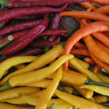 PROFI, Zelenina SEMO - Paprika Směs barev chili - pálivá, p2565 (Capsicum annuum L.)