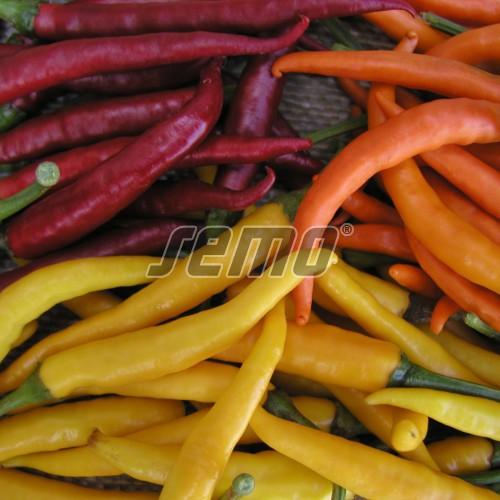 PROFI, Zelenina SEMO - Paprika roční Směs barev chili, p2565 (Capsicum annuum L.)